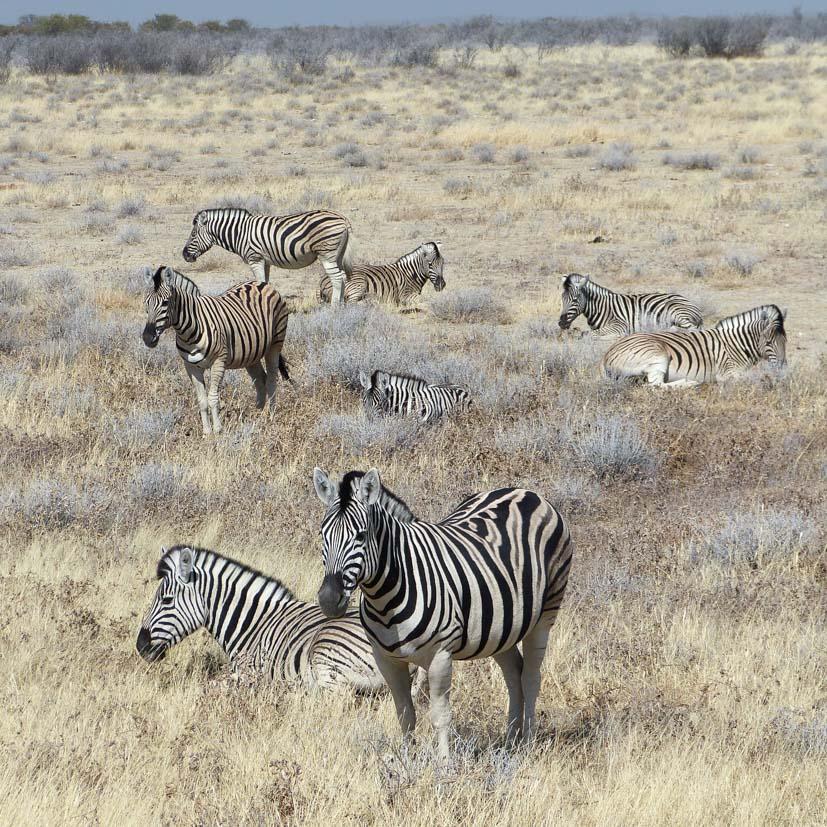 K12_007_Namibia