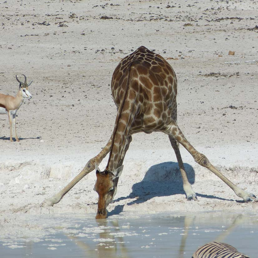 K12_010_Namibia