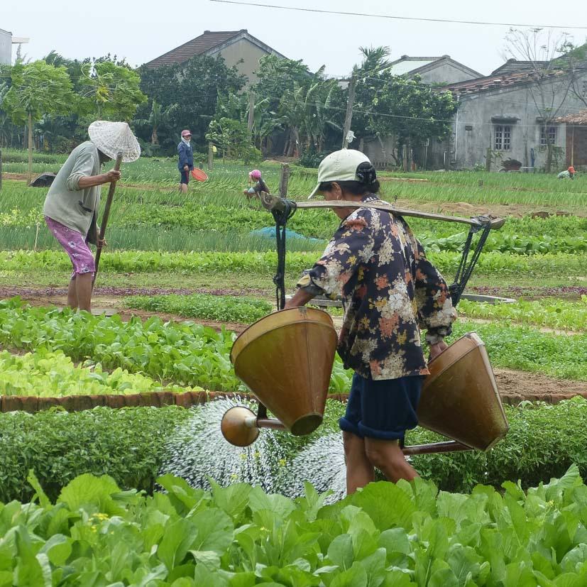K12_020_Kroning_Vietnam