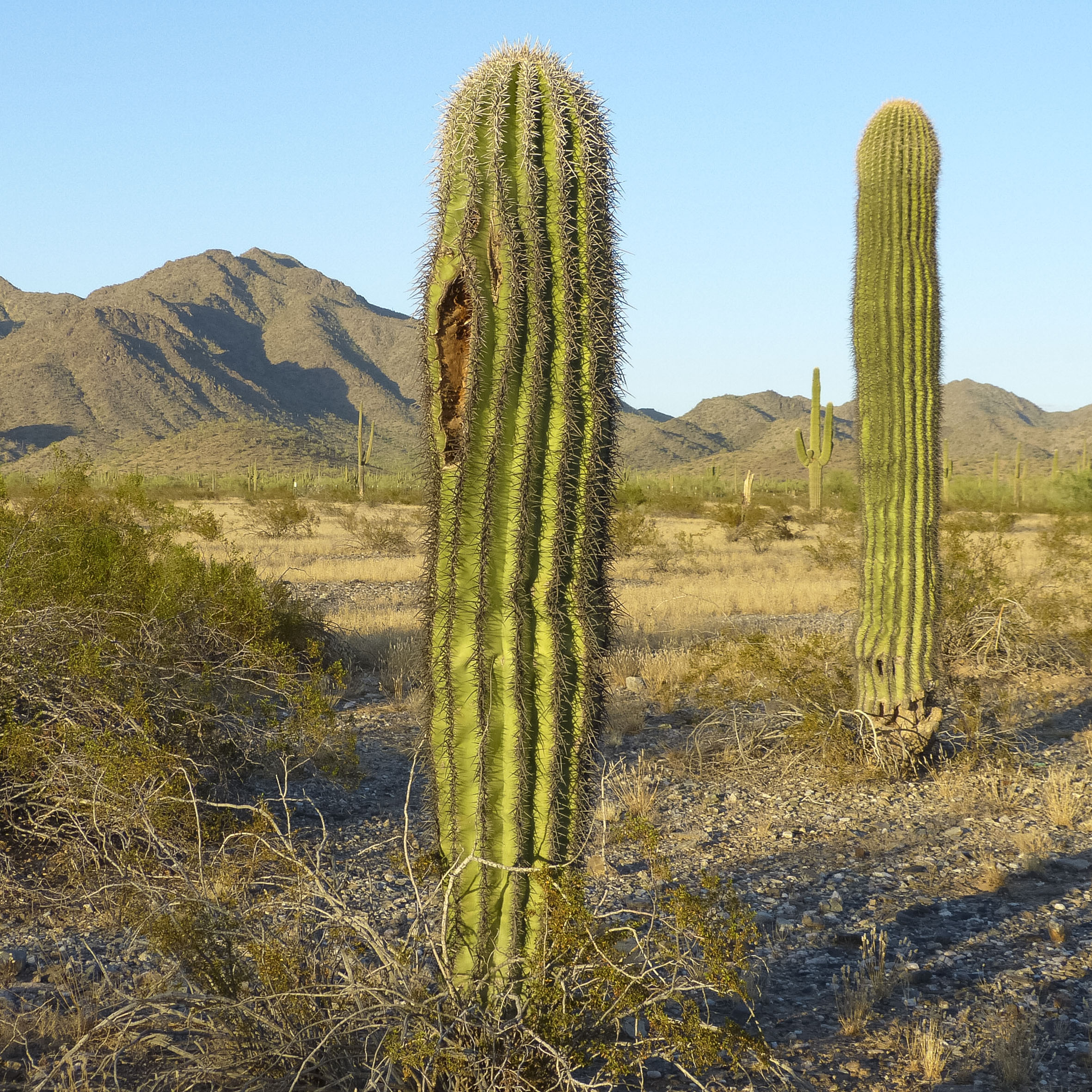 K19_089_Arizona_1