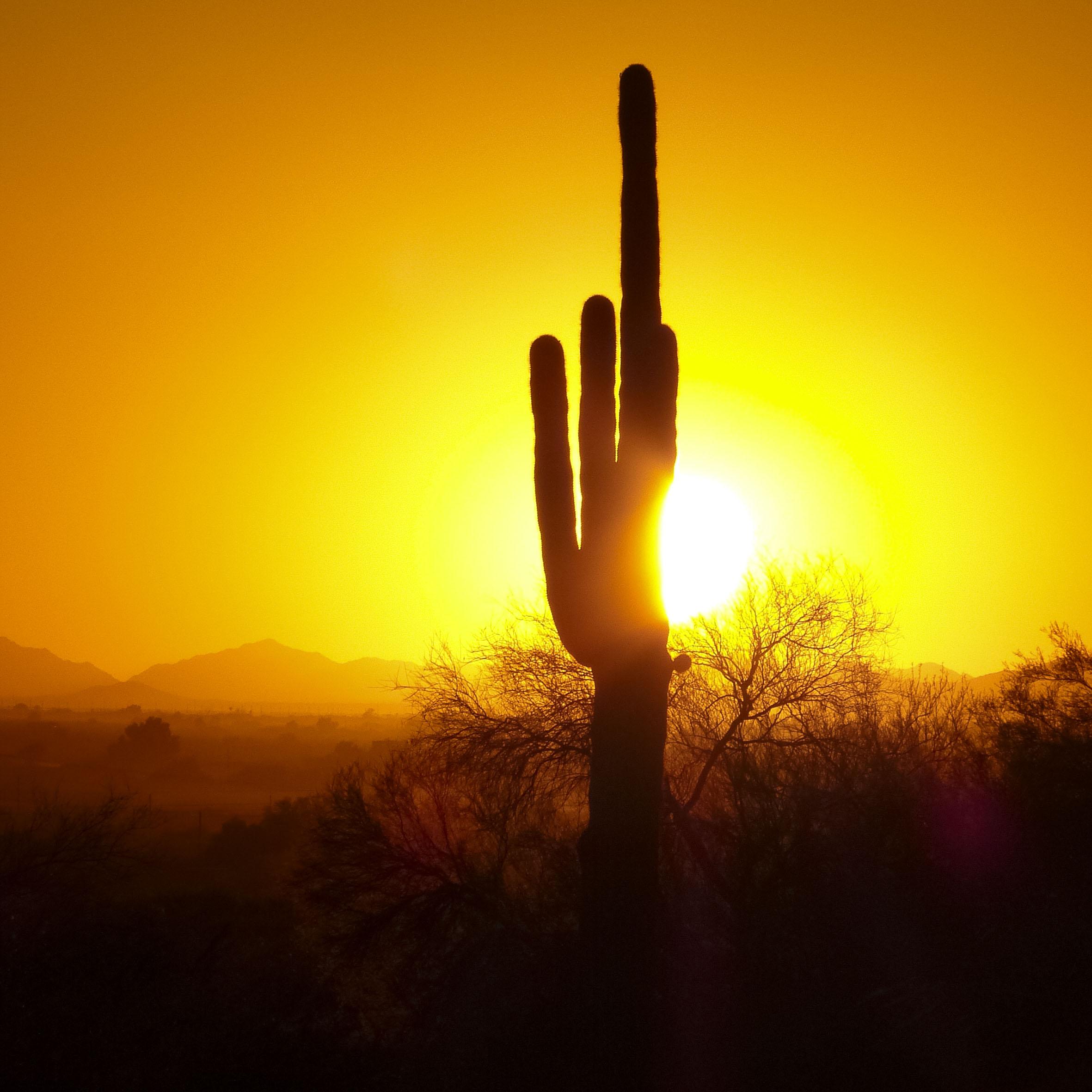 K19_091_Arizona_1