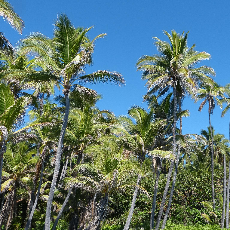 K19_110_Hawaii